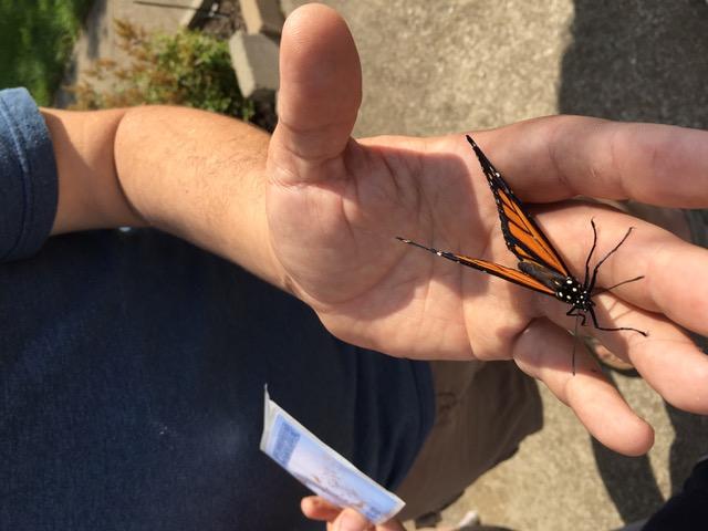 Butterfly Release, July 28 2018