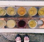 Humboldt Cider Co Cider Garden