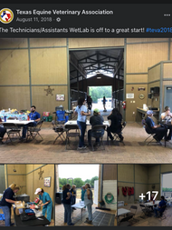peywal for Texas Equine Veterinary Association