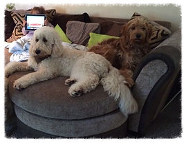 Colin and Areya snuggled up on the sofa