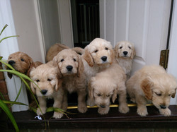 Curious puppies!
