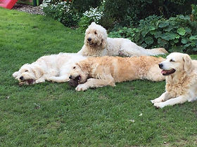 Iris, Seren, Colin and Lacey enjoying some garden relaxation
