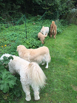 Colin, Lacey, Colson, Seren and Areya smelling the flowers