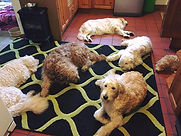 Colin, Areya, Lacey, Seren, Iris and Alba all snug on the rug