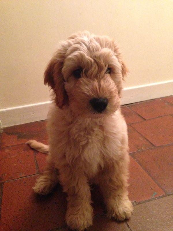 Bentley at 10 weeks