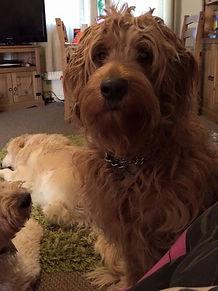 Areya with her puppy-dog eyes