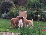 Lacey, Seren and Areya playing with a box in the garden