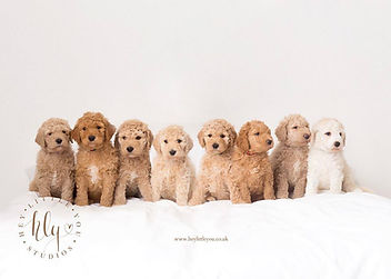 molly and coulson puppy pic 2018.jpg