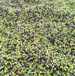 colourful-olives1.jpg