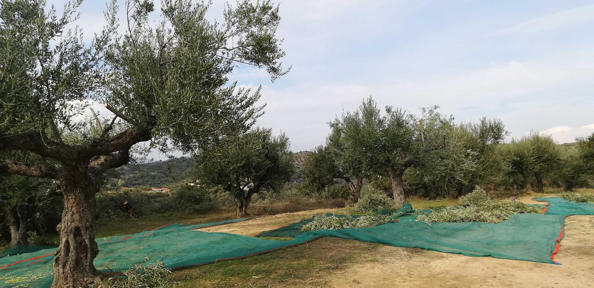 first-harvest-nets.jpg
