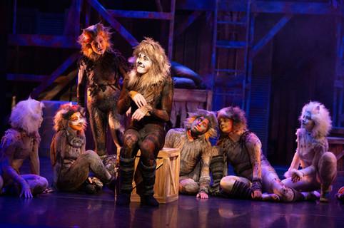 Gus the Theatre Cat