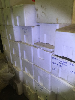 EPS boxes.JPG