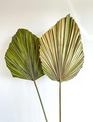 Duchess Palm - Green
