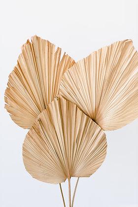 Duchess Palm - Natural