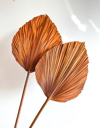 Royal Palm - Terracotta
