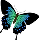 butterfly-1299922_1280.png