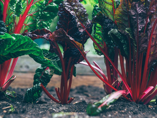 Seasonal Spotlight: Rhubarb