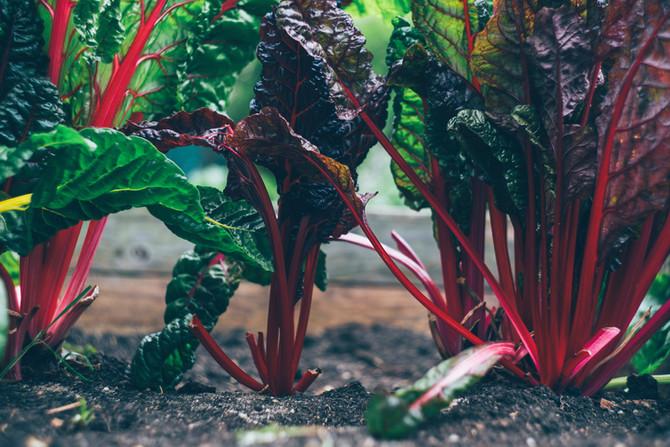Recettes de printemps : compotée de rhubarbe meringuée