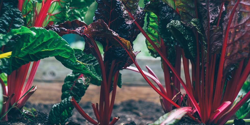 Planning A Home Vegetable Garden