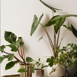 קבלו: 5 צמחים שאפילו אתם תרצו לגדל