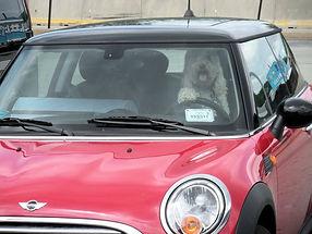 Winnie_driving.jpg