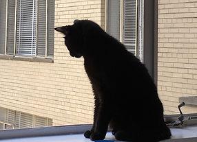 MJ window 2.JPG