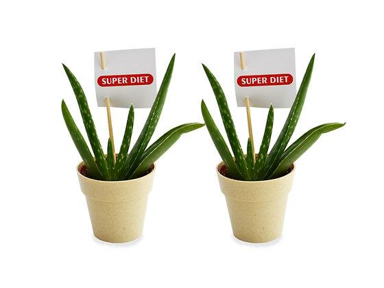 PLANTE PUBLICITAIRE : pot écolo 100% biodégradable