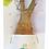 Thumbnail: Baobab Bonsai L'ORIGINAL