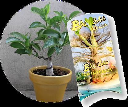 baobab avec plante.png