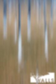 Lodgepole Meadows.jpg