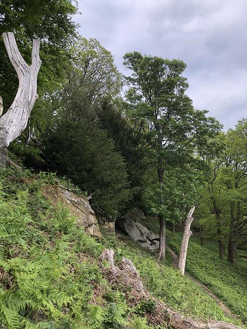 Happy Valley - Yoga, picnic, hike