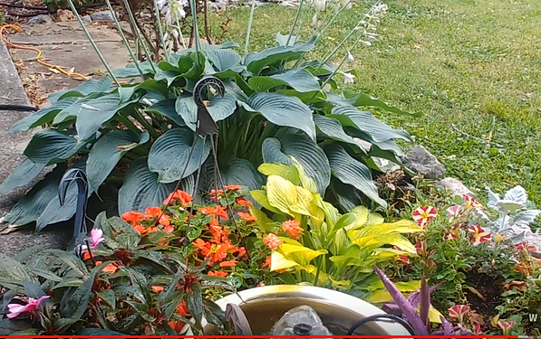 HOSTAS AND FLOWERS AROUND FOUNTAIN.PNG