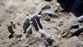 Mass Grave of Children Who Rejected Islamic State Found in Sinjar, Iraq