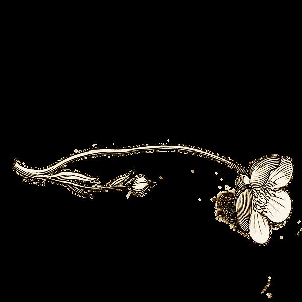 little wild bouquet2.png