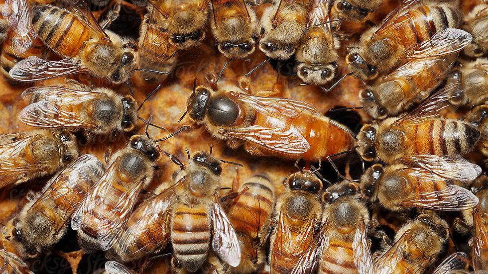 Queen Bees 2020