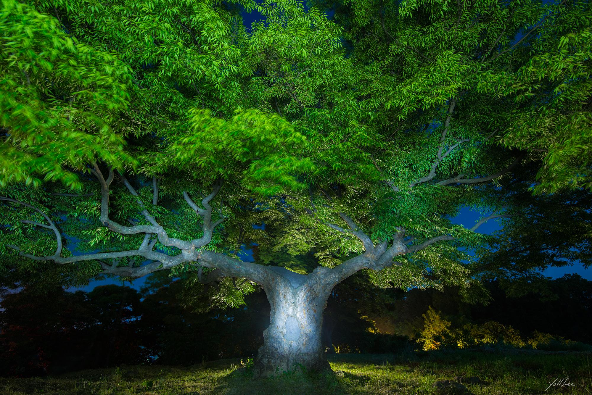 푸른나무_파주-2018