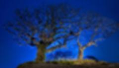 푸른나무_제주2-2015-1.jpg