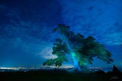 푸른나무_부여-2013