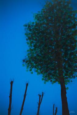 dreaming_tree_플라타너스에-닥친-겨울