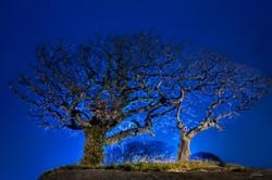 푸른나무_제주2-2015