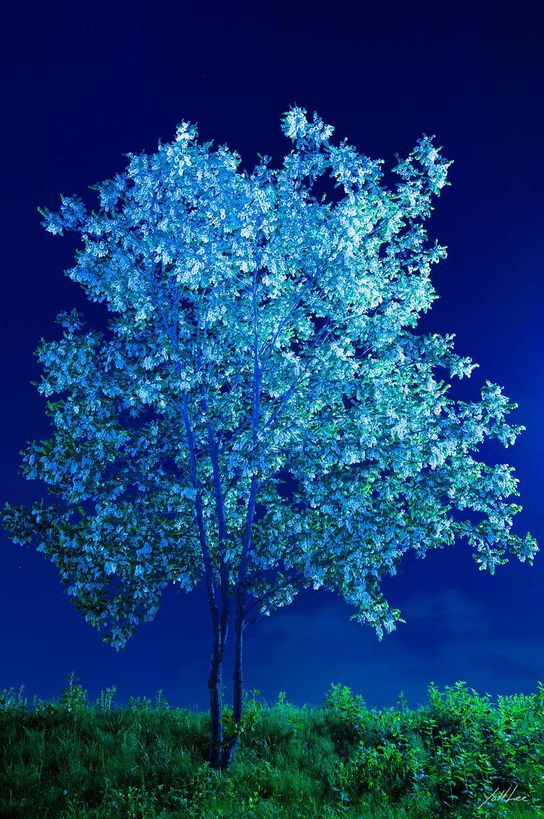 푸른나무_양재천2-2013