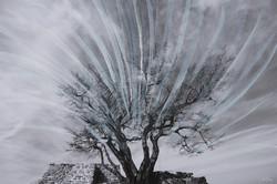 소사나무가-있는-참성단에-이는-바람