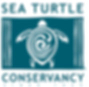 newday-impact-investing-sea-turtle-conse