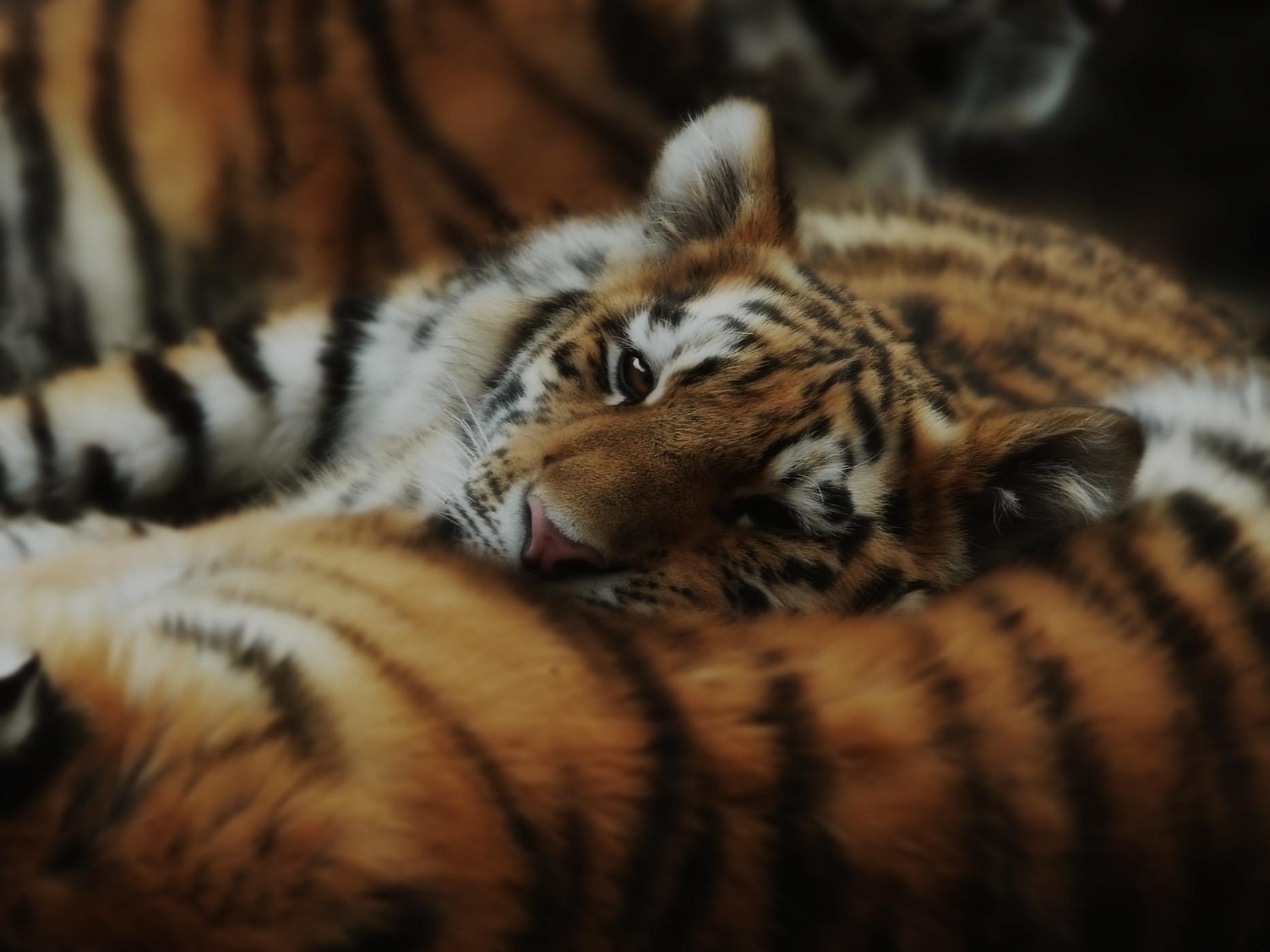 newday-impact-initiative-protect-wild-ti