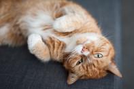 Nueva York prohibió la extirpación de uñas de los gatos