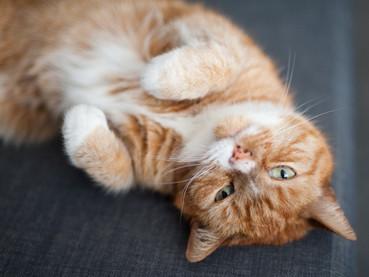 A Cat's Purr