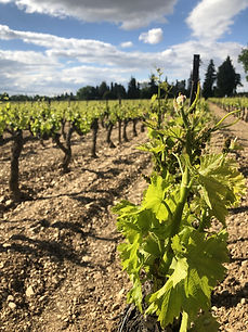 Vignes été Gîte Les Tours