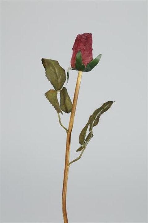 Torkad ros