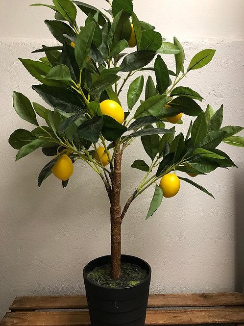 Citronträd konstväxt