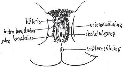 Fi, fidde, fisse, skede, tissekone, blomsten, vagina